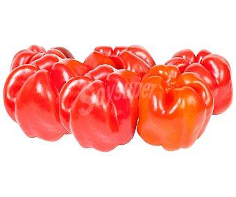 HORTALIZA ECOLÓGICA Pimiento rojo ecológico, bandeja 500 gramos