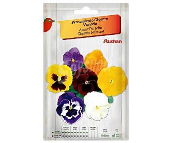 Producto Alcampo Sobre de semillas para plantar pensamientos de la variedad Gigante y de colores variados alcampo