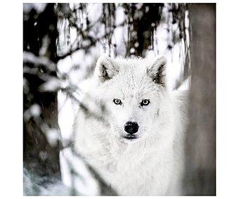 Lienzo de hermoso retrato de lobo blanco en el bosque, impreso en canvas, lamina 30x30 cm, artis.