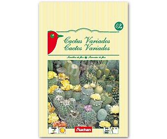 Auchan Semillas para plantar cactus de diferentes variedades 0.2 Gramos