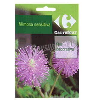 Carrefour Mimosa sensitiva