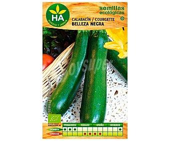 HA-Huerto y Jardín Semillas ecológicas para sembrar calabacín de la variedad belleza negra 4 gramos