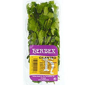 Herbex Cilantro Bandeja 20 g