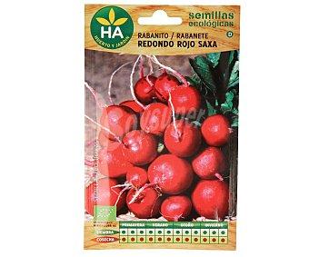 HA-Huerto y Jardín Semillas ecológicas para sembrar rabanitos de la variedad redondo rojo Saxa 2.78 gramos