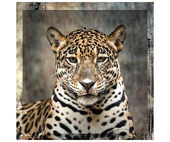 IMAGINE Lámina con la imagen de un elegante leopardo y dimensiones de 50x50 centímetros 1 unidad