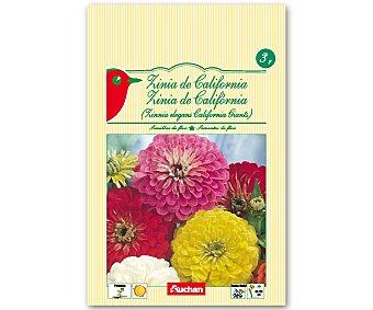 AUCHAN Semillas para plantar Zinia de la variedad California 3 Gramos