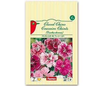 Auchan Semillas para plantar clavel de la variedad Chino 1 Gramos