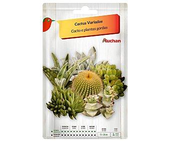Producto Alcampo Sobre de semillas para plantar cactus variados alcampo