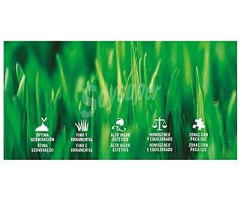 Producto Alcampo Caja de 1 kilogramo con semillas para plantar cesped para zonas sombrias o con poca luz alcampo