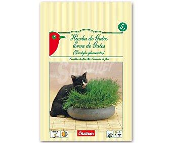 AUCHAN Semillas para plantar Hierba de Gatos 5 Gramos