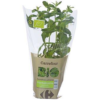 Carrefour Hierbabuena maceta bio 1 manojo.