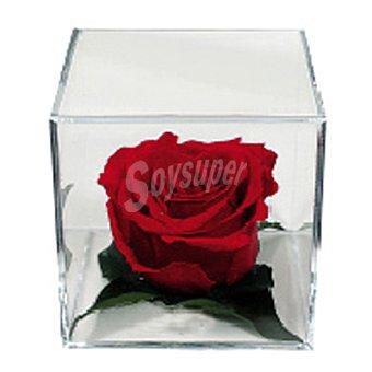 Rosa eterna cubo metacrilato