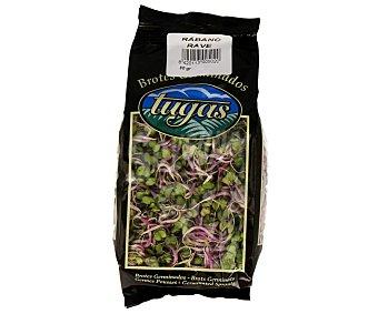 Tugas Brotes germinados de rábanos 80 gramos