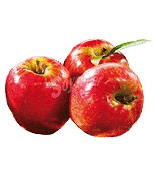 BIO Manzana roja Bandeja de 3 ud