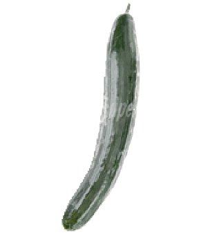 Pepino negro Bolsa de 1000.0 g.