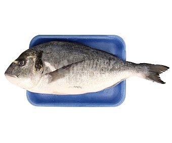 Dorada Dorada (pieza entera) 500 gramos aproximados