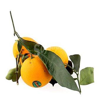 Naranja con hoja de Mallorca Bolsa de 1000 g