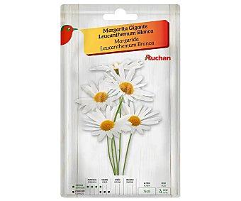 Producto Alcampo Sobre de semillas para plantar margaritas de la variedad Leucanthemum de tamaño gigante y color blanco alcampo