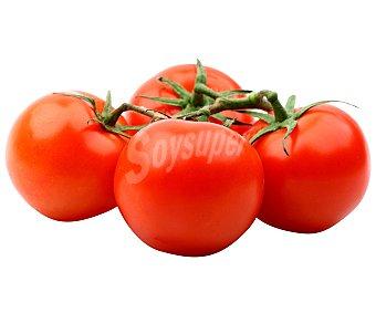 HORTALIZA Tomate para untar bandeja 400 Gramos