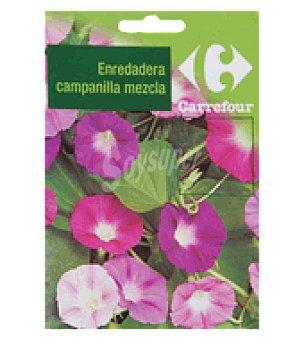 Carrefour Enredadera de campanilla