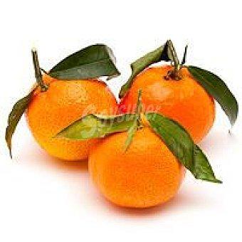 Mandarina con hoja 1 kg