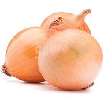 Cebolla nueva al peso