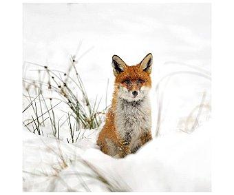 Lienzo de hermoso retrato de un zorro en la nieve impreso en canvas, lamina 30x30 cm, artis.
