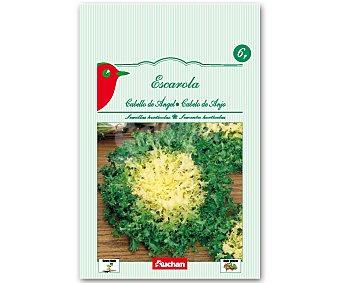 Auchan Semillas para sembrar escarola de la variedad Cabello de Angel Semillas Escarola