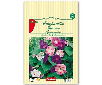 AUCHAN Semillas para plantar Campanillas de diferentes colores 4 Gramos
