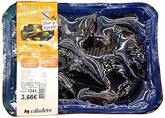 Caladero Mejillon gallego vivo y limpio (listos para cocinar) Bandeja 1 kg peso aproximado