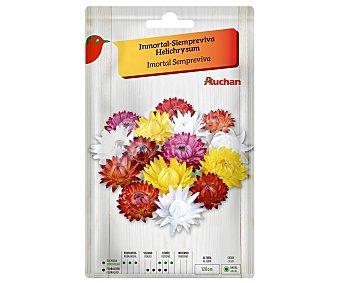 Producto Alcampo Sobre de semillas para plantar siempreviva de la variedad Helichrysum de colores variados alcampo