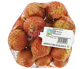 HORTALIZA Cebolla Producción Ecológica Malla de 1 Kilogramo