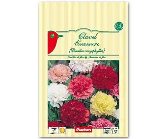 AUCHAN Semillas para plantar Claveles de diferentes colores 0.5 Gramos