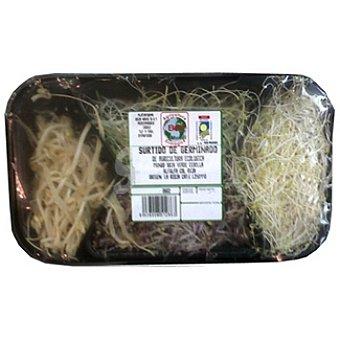 Brotes de alfalfa Bandeja 30 g