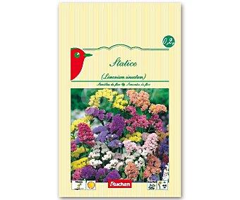 AUCHAN Semillas para plantar Statice de diferentes colores 0.2 Gramos